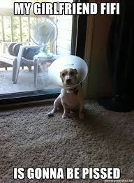 Dog Girlfriend Meme - my girlfriend fifi is gonna be pissed dog in cone of shame meme