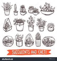 royalty free succulents and cacti sketch set 339244295 stock
