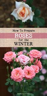 456 best garden cold climate gardening images on pinterest