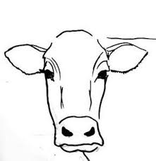 the 25 best cow drawing ideas on pinterest cartoon cow cow