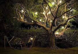 Landscape Tree Lights Landscape Tree Lighting Newsonair With Regard To Ucwords