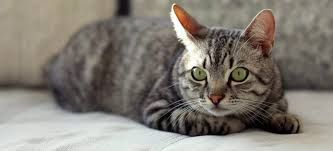 cat health archives veterinarians all creatures veterinary august 22nd is take your cat to the vet day cat exams
