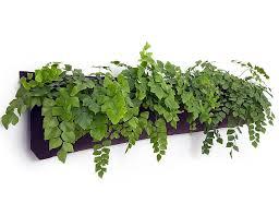 vertical gardening woolly pockets wally five eartheasy com