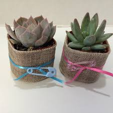 succulent plants 30 gorgeous baby shower favors with pots with
