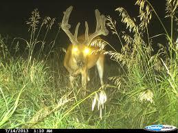 february 2015 big deer page 2