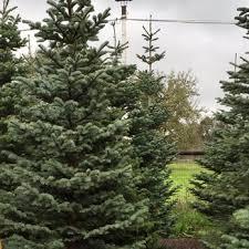 s trees trees 5790 rivera rd