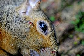 How To Hunt Squirrels In Your Backyard by Air Rifle Hunting Plinking For Squirrels Quiet Affair