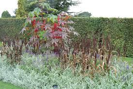 rhs wisley part 2 gardeninacity
