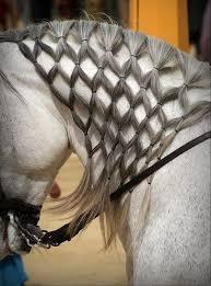 hairstyles for horses pinterest 상의 hairstyles horses 에 관한 상위 13개 이미지 워터