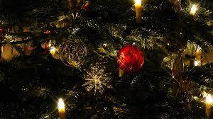 free photo christmas tree christmas sparkle free image on