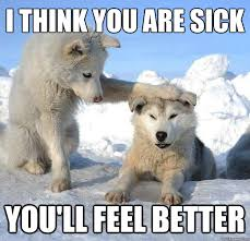 Sick Puppy Meme - i think you are sick you ll feel better caring husky quickmeme