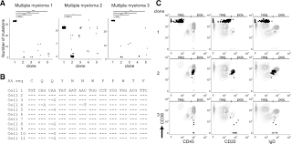 clonal expansion and interrelatedness of distinct b lineage