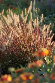 5 ways ornamental grasses make your yard better costa farms