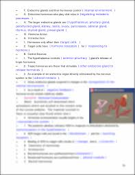 study guide 13 22 03 00 endocrine system chapter 13 study guide