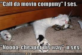 Moving In Together Meme - moving was a great idea until i started packing funny