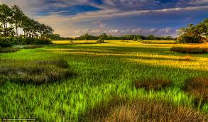 South Carolina landscapes images Download wallpaper hilton head island south carolina landscape jpg
