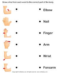pictures on human body worksheets for kindergarten bridal catalog