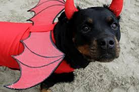 Halloween Costumes Dogs Cutest Puppy Costumes 2011 Halloween Costumes Rottweilers Halloween Costumes