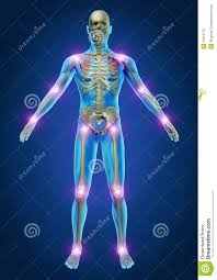 Joints Human Anatomy Human Painful Joints Royalty Free Stock Photos Image 23315778