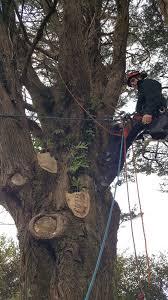 bringing kirk s tree back to wellington