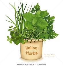 italian herb garden planter traditional flavors stock vector