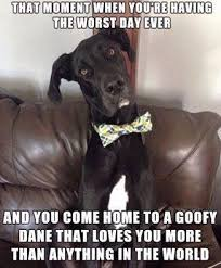 Great Dane Meme - great danes of roseburg and friends home facebook