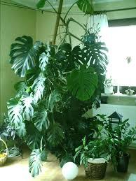 Wohnzimmer Pflanzen Ideen Große Pflanze Fürs Wohnzimmer Hausgarten Net