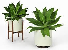 indoor plants singapore terrarium design marvellous indoor decorative plant pots indoor
