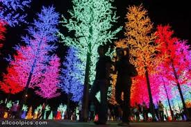 cool colored trees cool pictures