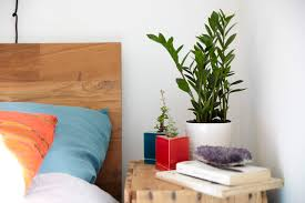 Feng Shui Livingroom Decorating Bedroom With Plants Air Purifying Indoor Names That