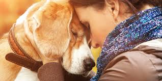 how a dog helped me manage my anxiety and depression huffpost