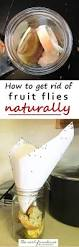 How To Get Rid Of Mosquitoes In My Backyard Best 25 Killing Gnats Ideas On Pinterest Knat Repellant Gnat