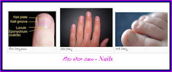 medical tips in telugu our nails and health మన గ ళ ళ