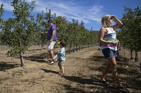 apples may be few but apple days are on the san diego union tribune