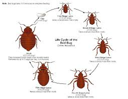 Bed Bug Detector How To Control Bed Bugs Get Rid Of Bed Bugs Bed Bug Detection