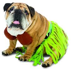 halloween dog shirts amazon com pet tiki hawaiian dog costume for small dogs by pony