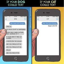 Texting Memes - dog versus cat texting edition lolcats lol cat memes funny