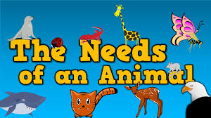 the needs of an animal song for kids about 4 things animals need