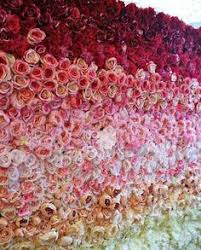 wedding backdrop gumtree stunning melbourne flower wall for hire party hire gumtree