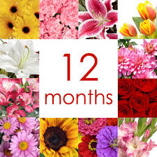 flowers of the month flower of the month club tallahassee florist flowers tallahassee