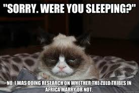 Grumpy Cat Sleep Meme - grumpy cat disturbed from its sleep funny pic grumpy cat meme