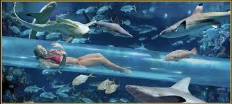 chambre aquarium voyages retour du monde page 11