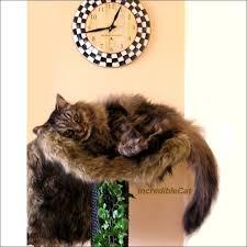modern cat tree cat tree furniture 4 u0027 high steamboat cat lover gift