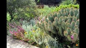 california native plant gardens what about cactus mixing california native with non native