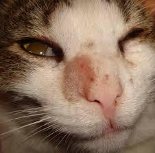 york co spca kills 36 cats in response to ringworm outbreak
