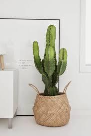 99 great ideas to display houseplants houseplants garden web