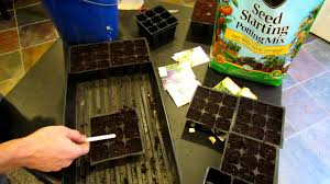 starting herbs and perennials indoors seed mix and planting