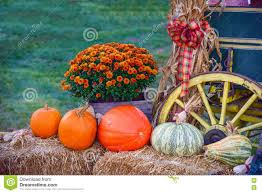 thanksgiving holiday images thanksgiving holiday autumn harvest display pumpkin patch