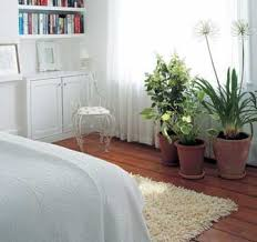 living design how to decorate with plants green homes