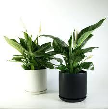 indoor plants singapore office design office indoor plants dubai office plants no light